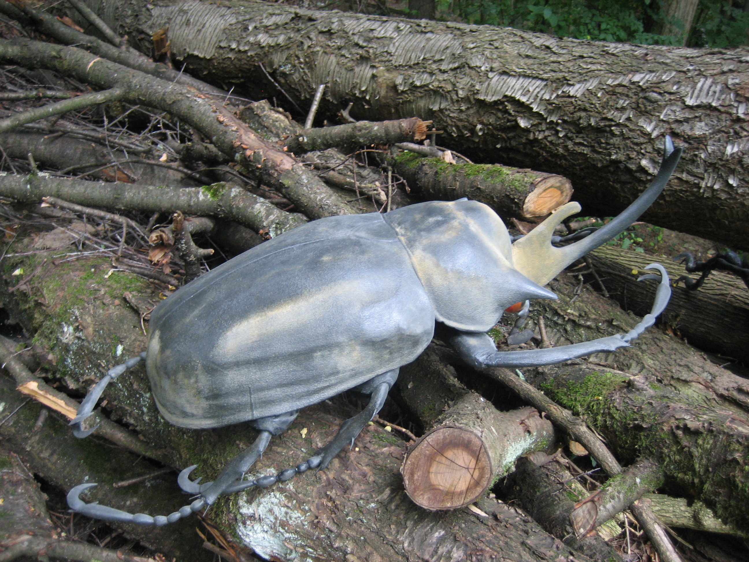 IMG_2407.JPG schw. Käfer auf Baumstümpfen