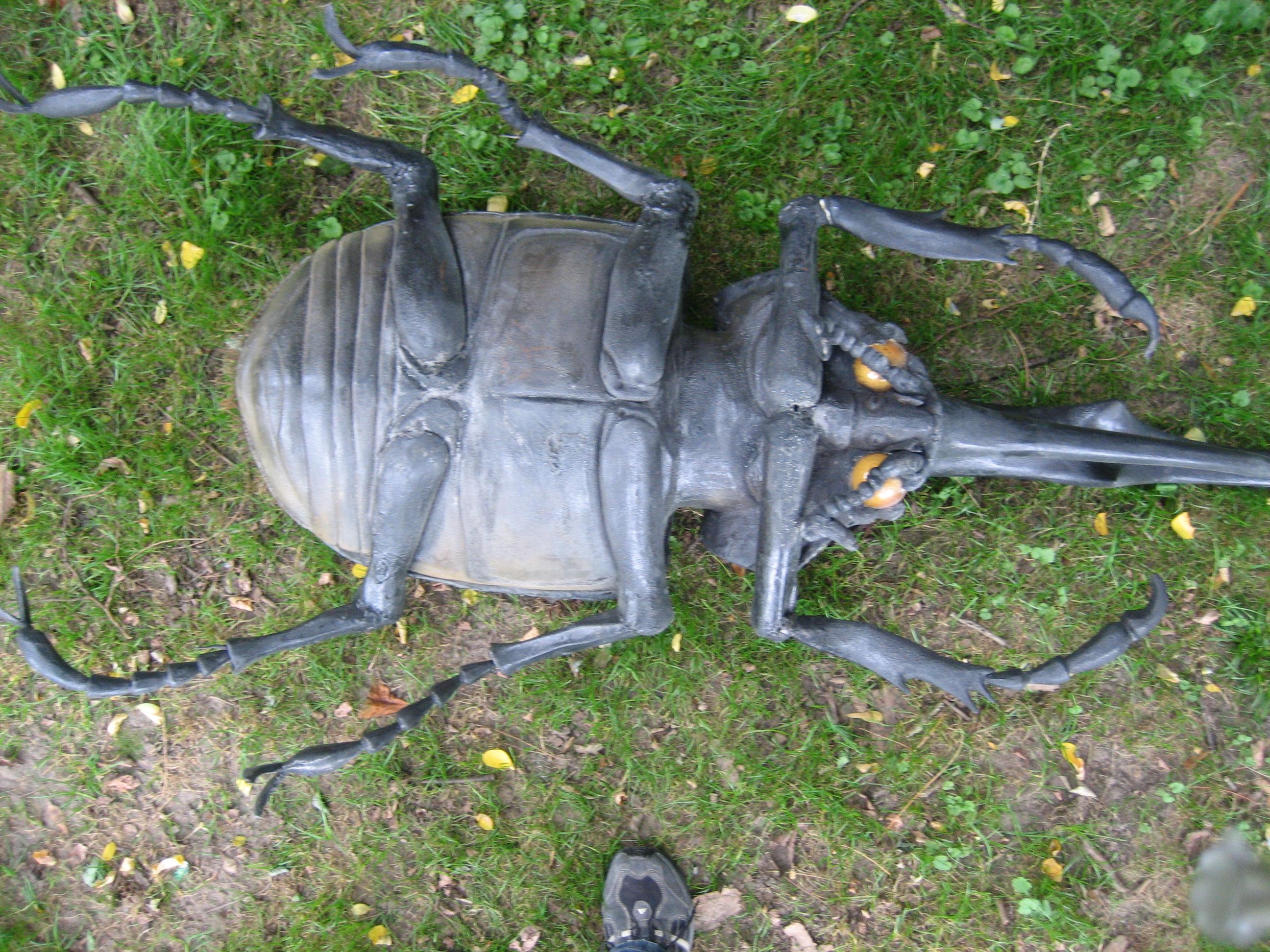IMG_2416.JPG, schw. Käfer Unterseite